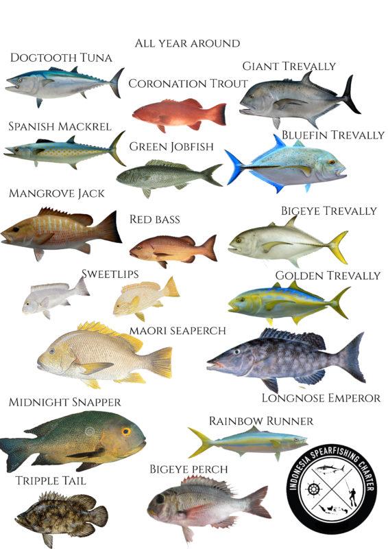 EAST BALI FISH SPECIES