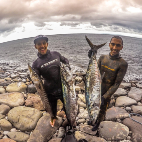 Bali Spearfishing Spanish Mackerel 20 KG