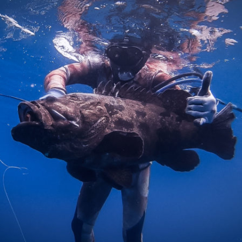 Bali spearfishing giant Flowery cod