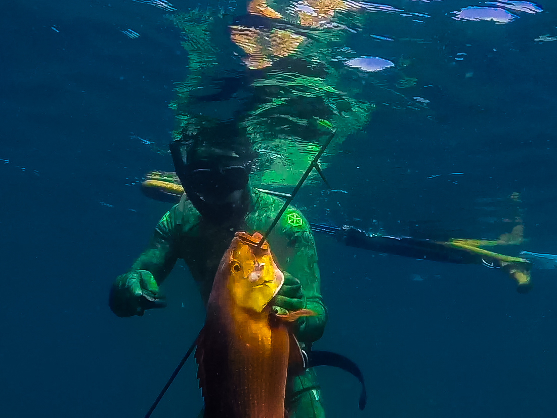 Bali Spearfishing Redbass