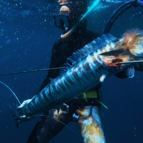 BALI spearfishing wahoo