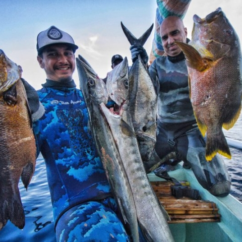 Bali Spearfishing Maori Seaperch, midnight snapper