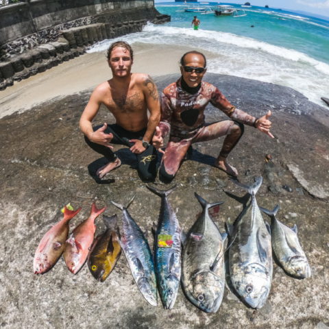 Bali spearfishing Spanish mackerel, pinball snapper, midnight snapper, Giant trivially