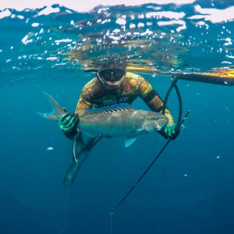 Bali Spearfishing Green Jobfish