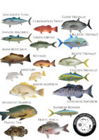 Bali spearfishing species