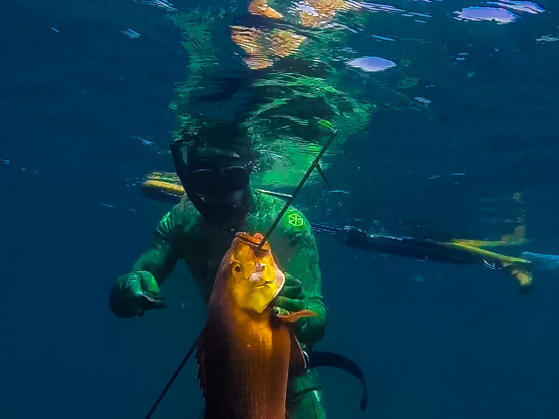 Bali Spearfishing Redbass